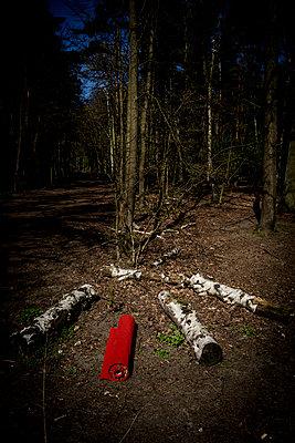 Roter Teppich zwischen Birkenstämmen - p1212m1134669 von harry + lidy