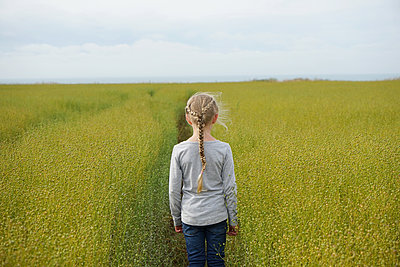 A small girl standing in a flax field - p1610m2196451 by myriam tirler