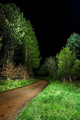 Dunkler Waldweg - p248m1087013 von BY