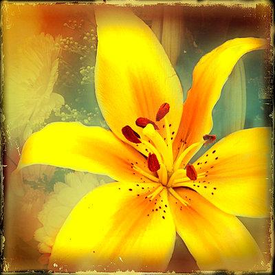 Lily Yellow     - p3438374 by Teri Lou Dantzler
