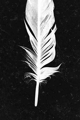 White feather - p450m2044432 by Hanka Steidle