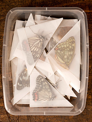Schmetterlingessammlung - p451m919261 von Anja Weber-Decker