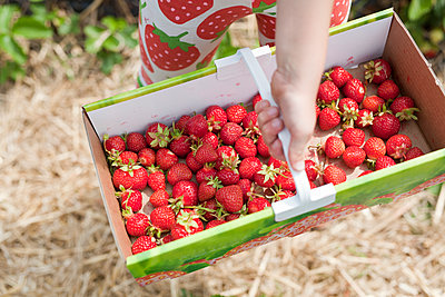 Child picking strawberries - p699m2007801 by Sonja Speck