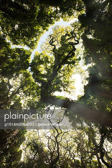 Mystischer Wald - p1514m2054023 von geraldinehaas