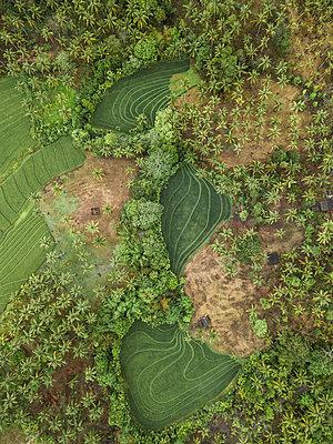 Felder und Bäume, Luftaufnahme - p1108m2141975 von trubavin