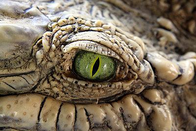 Krokodilstränen - p2770152 von Dieter Reichelt