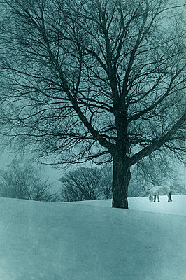 Weißes Pferd in Winterlandschaft - p794m729266 von Mohamad Itani