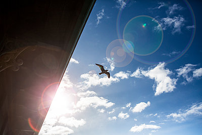 A seagull flies overhead in a blue sky with light cloud on a bright winter day on the Uk coast. - p1057m1539846 by Stephen Shepherd