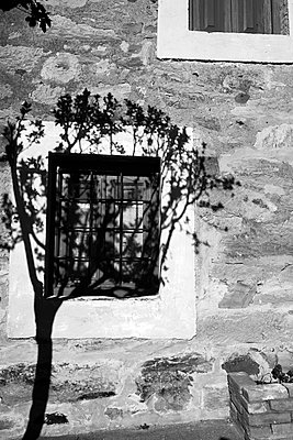 Silhouette of tree on house wall - p1165m1441845 by Pierro Luca