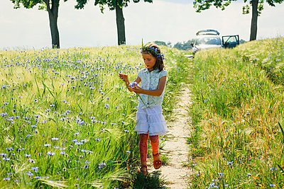 Girl picking purple wildflowers in sunny, idyllic rural field - p301m2075870 by Sven Hagolani
