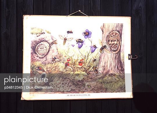 p34812345 von Dick Clevestam
