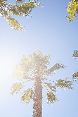 Unter Palmen - p447m968016 von Anja Lubitz