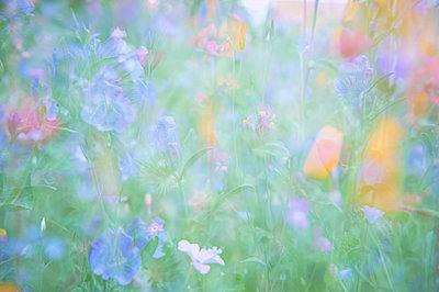 Blumenwiese - p763m971744 von co-o-peration