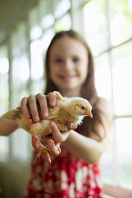A young girl in a floral sundress, holding a young chick carefully in her hands. - p1100m875934f by Bill Miles