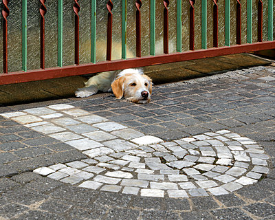 Tired Dog - p1154m2134922 by Tom Hogan