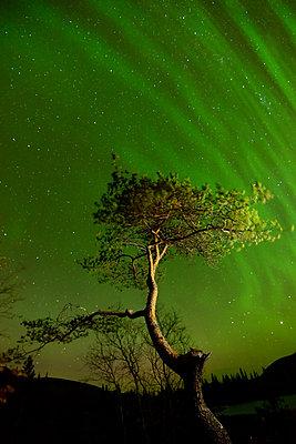 Aurora borealis above tree at Polygonal Lakes at night, Khibiny mountains, Kola Peninsula, Russia - p429m1155438 by Yevgen Timashov