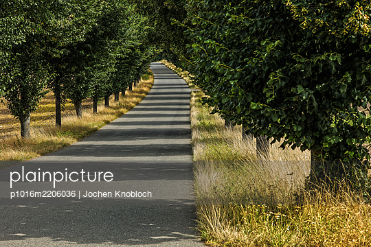 Avenue - p1016m2206036 by Jochen Knobloch