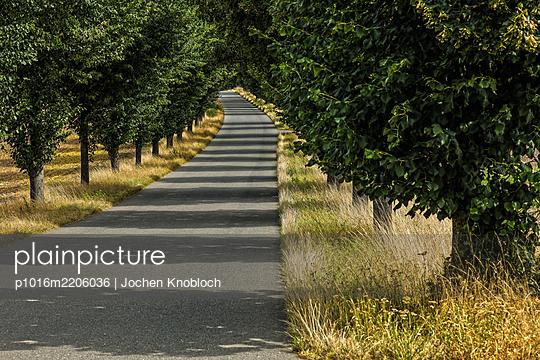 Allee - p1016m2206036 von Jochen Knobloch