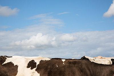 Detail on a cow herd - p1682m2264043 by Régine Heintz