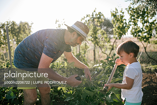 Grandfather and grandson picking eggplants in field - p300m2206722 by LUPE RODRIGUEZ