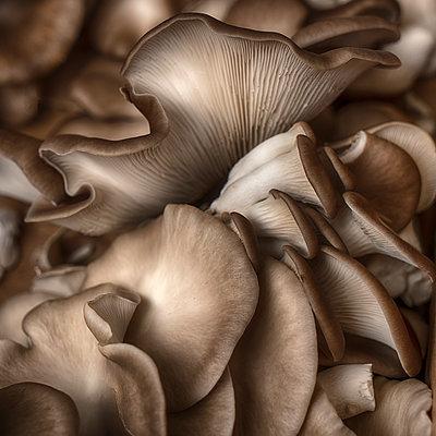Austernpilze - p1154m1193288 von Tom Hogan
