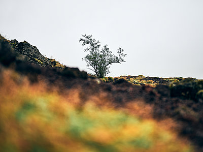 Green bush on cliff at countryside - p1166m2157273 by Cavan Images