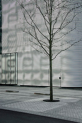 Stadtbaum - p417m833344 von Pat Meise