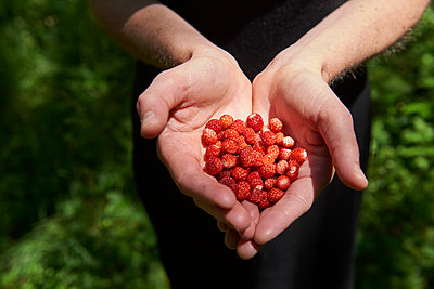Wild strawberries - p491m2253576 by Ernesto Timor
