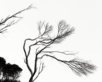 Wind bent tree branches - p1154m2289162 by Tom Hogan