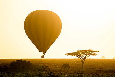 Hot air balloon safari, Serengeti Balloon Safaris, Serengeti National Park, Tanzania, Africa - p651m2271097 by Paul Joynson Hicks photography