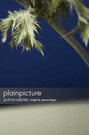 Stalk and leaf - p1371m1225738 by virginie perocheau