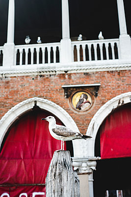 Möwe am Fischmarkt am Rialto di Mercato, Venedig - p1493m1584756 von Alexander Mertsch