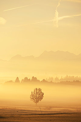 Morning fog in the country of Berchtesgaden - p533m1573836 by Böhm Monika
