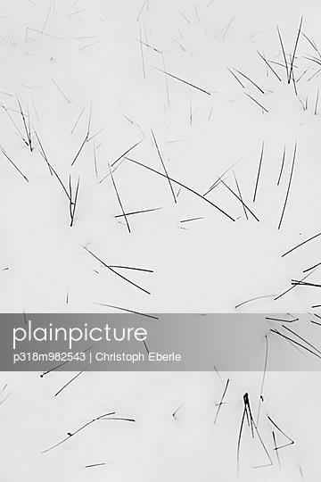 Grashalme - p318m982543 von Christoph Eberle
