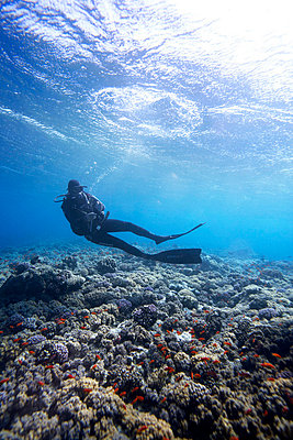Scuba diver hanging in between the surface and the reef - p3434658 by Kennet Havgaard