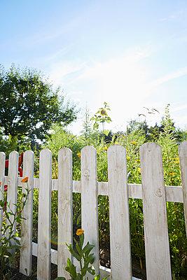 weißer Gartenzaun - p464m1496623 von Elektrons 08