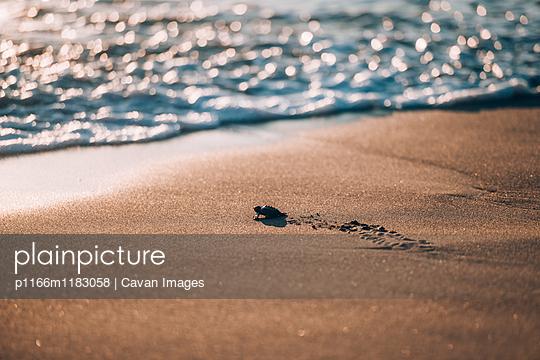 p1166m1183058 von Cavan Images