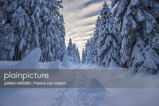 Germany, Lower Saxony, Harz National Park, winter landscape - p300m1450285 by Patrice von Collani