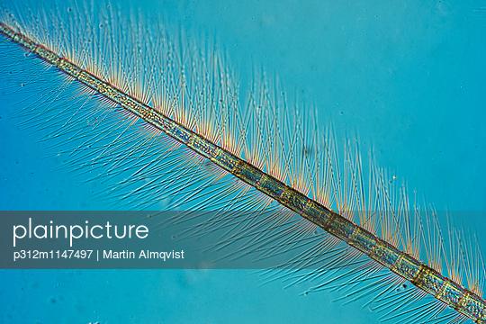 p312m1147497 von Martin Almqvist