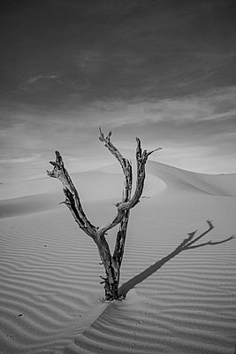 Sand dunes and dry tree in the Jalapao National Park, northern Brazil - p1166m2137476 by Cavan Images