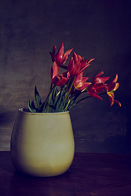 Vase with red tulips in front of wall at twilight - p1312m2272147 by Axel Killian