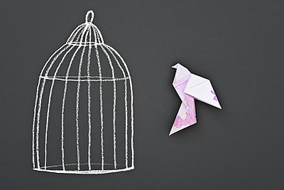 Painted birdcage and banknotes - p715m1196396 by Marina Biederbick