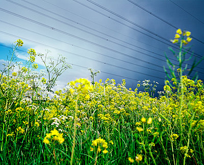 Canola field and high-tension lines - p1132m1016944 by Mischa Keijser