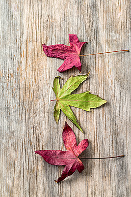 Autumn leaves lying on a wooden board. - p1436m2150669 by Joseph S. Giacalone
