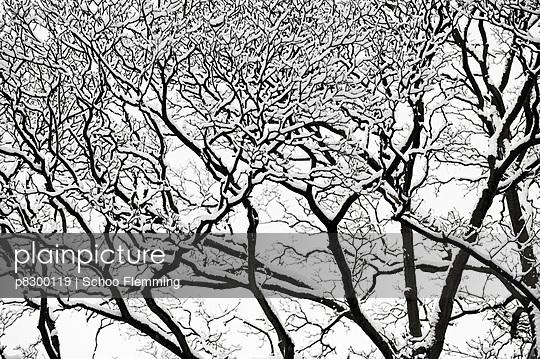 Geäst im Winter - p8300119 von Schoo Flemming