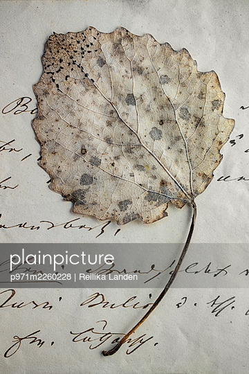 Weathered leaf on letter - p971m2260228 by Reilika Landen