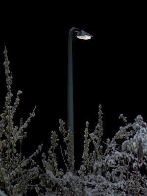 Street lamp in winter's night - p1279m1355600 by Ulrike Piringer