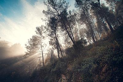 Dreamy Morning - p1290m1112639 by Fabien Courtitarat