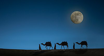 Camel caravan with night sky and full moon, Dubai, United Arab Emirates - p429m1021706f by Lost Horizon Images
