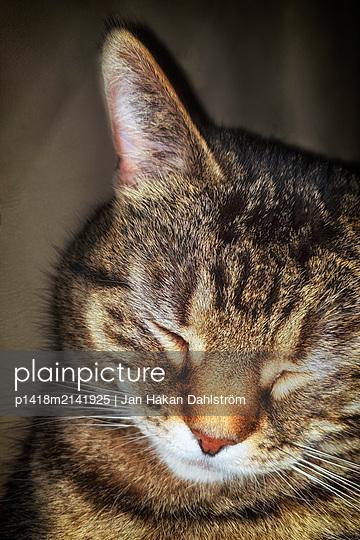 Cat sleeping - p1418m2141925 by Jan Håkan Dahlström